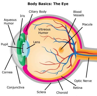 Eyes | mannatacademy.com